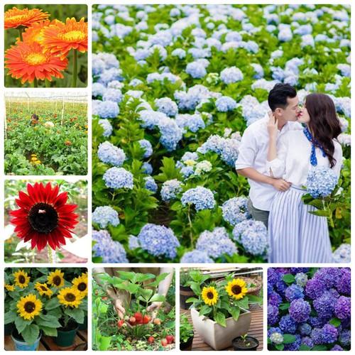 COMBO hạt giống hoa Siêu tiết kiêm HOT VIP 7 FREESHIP