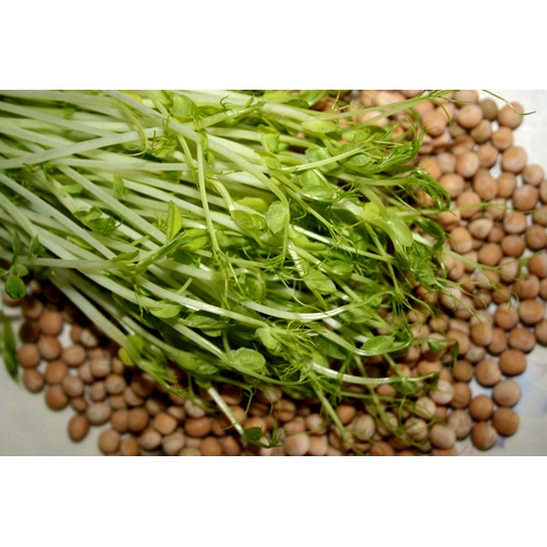 Hạt giống mầm đậu hà lan - 5070895 , 10726314 , 15_10726314 , 14000 , Hat-giong-mam-dau-ha-lan-15_10726314 , sendo.vn , Hạt giống mầm đậu hà lan