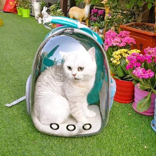 Balo vận chuyển nắp nhựa trong cho chó mèo