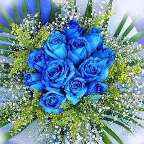 hạt giống hoa hồng xanh | hoa hồng xanh - 5079058 , 10841352 , 15_10841352 , 39000 , hat-giong-hoa-hong-xanh-hoa-hong-xanh-15_10841352 , sendo.vn , hạt giống hoa hồng xanh | hoa hồng xanh