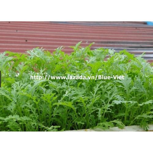 Hạt giống rau Cải ngọt đuôi phụng - 10468392 , 10842724 , 15_10842724 , 11000 , Hat-giong-rau-Cai-ngot-duoi-phung-15_10842724 , sendo.vn , Hạt giống rau Cải ngọt đuôi phụng