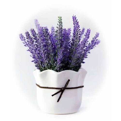Hạt giống hoa oải hương - 1 gói 100 hạt
