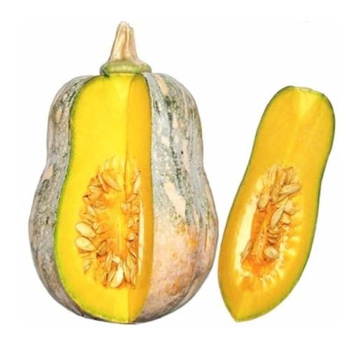 Hạt giống bí hạt đậu
