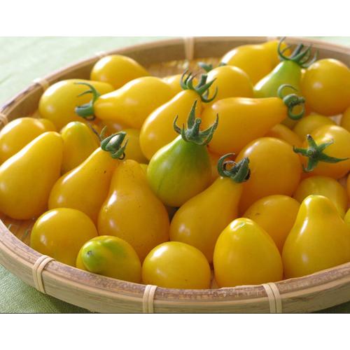 Hạt giống cà chua bi quả lê vàng