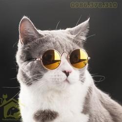 Kính mắt thời trang cho chó mèo – Phụ kiện thú cưng Hà Nội