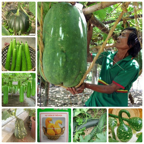 COMBO 10 loại hạt giống bầu bí dễ trồng bốn mùa LUCKY VINA