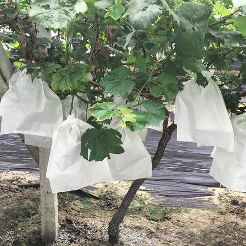 Túi bao chùm nho giấy trắng 24x30cm 100 cái