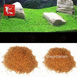 Trân châu lá nhỏ hạt giống thủy sinh cỏ thực vật dùng cho bể cá phụ kiện trang trí bể cá cảnh quan tự nhiên bể cá shop nhã nam shopnhanam