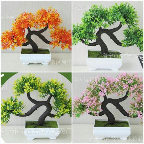 Chậu hoa bonsai Phú Quý Cát tường - 5535443 , 11939467 , 15_11939467 , 65000 , Chau-hoa-bonsai-Phu-Quy-Cat-tuong-15_11939467 , sendo.vn , Chậu hoa bonsai Phú Quý Cát tường