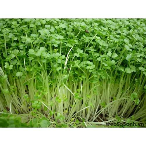 Hạt giống Rau mầm Bông cải xanh - 5212312 , 11512497 , 15_11512497 , 15000 , Hat-giong-Rau-mam-Bong-cai-xanh-15_11512497 , sendo.vn , Hạt giống Rau mầm Bông cải xanh