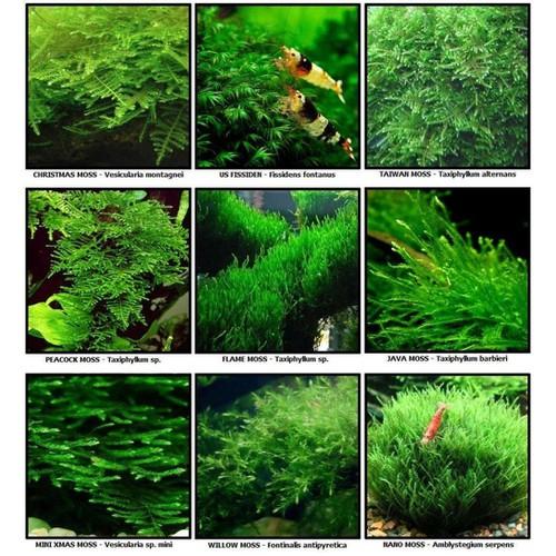 Hạt giống cây thủy sinh, trồng bể nuôi cá - 5211122 , 11510807 , 15_11510807 , 14000 , Hat-giong-cay-thuy-sinh-trong-be-nuoi-ca-15_11510807 , sendo.vn , Hạt giống cây thủy sinh, trồng bể nuôi cá