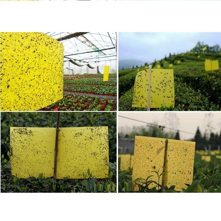 Set 5 miếng dán bẫy côn trùng, ruồi vàng kích thước 30cmx25cm 6