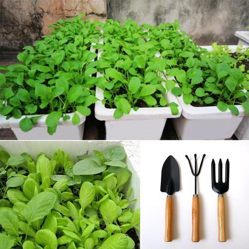 Combo Bộ dụng cụ làm vườn 3 món cán gỗ và 4 gói hạt giống rau