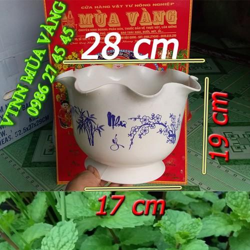 Chậu Nhựa Trồng Hoa Kiểng   Chậu Tai Bèo Trắng  Giá 32k