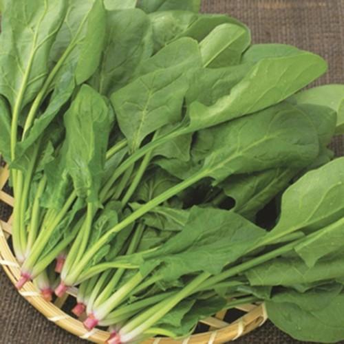 Hạt giống cải bó xôi rau chân vịt chịu lạnh -chịu nhiệt- 20gr - 4602935 , 13727756 , 15_13727756 , 25000 , Hat-giong-cai-bo-xoi-rau-chan-vit-chiu-lanh-chiu-nhiet-20gr-15_13727756 , sendo.vn , Hạt giống cải bó xôi rau chân vịt chịu lạnh -chịu nhiệt- 20gr