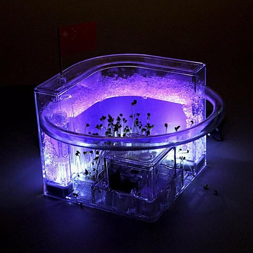 Đồ chơi nuôi kiến,ngôi nhà của kiến đã bao gồm kiến, có đèn- free ship toàn quốc