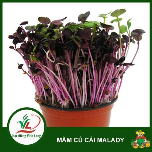Hạt giống mầm củ cải Malady