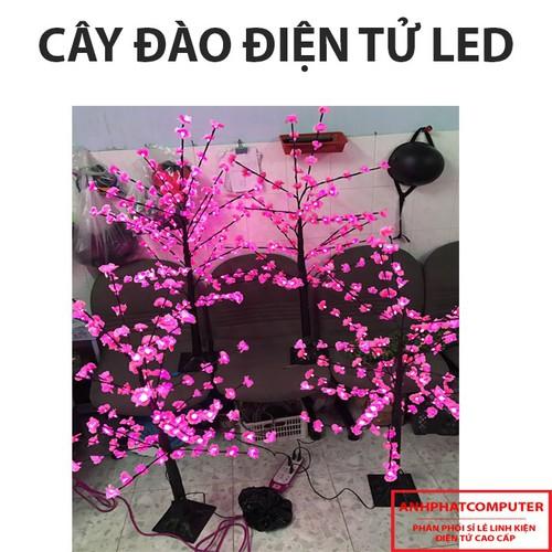 cây đào điện cay dao dien
