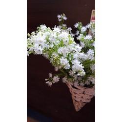 hoa thạch thảo - hoa giả