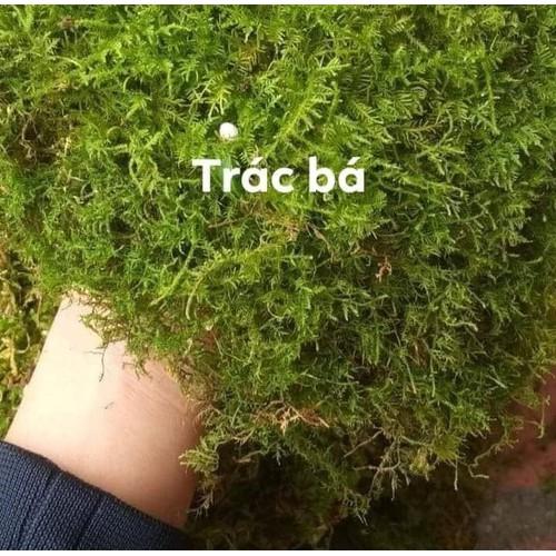 Rêu dùng cho bán cạn, tiểu cảnh - 100gr
