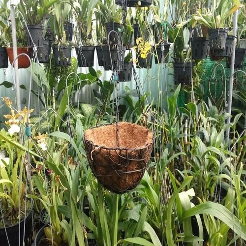 Chậu sơ dừa trồng hoa tổ chim nhỏ 20cm