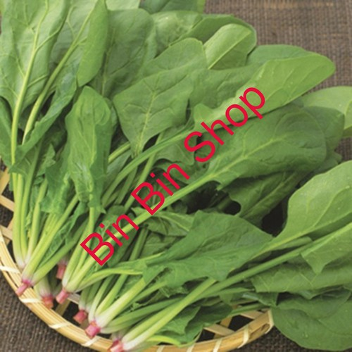 Hạt giống rau cải bó xôi chân vịt 20 gr - 19610432 , 22910555 , 15_22910555 , 20000 , Hat-giong-rau-cai-bo-xoi-chan-vit-20-gr-15_22910555 , sendo.vn , Hạt giống rau cải bó xôi chân vịt 20 gr