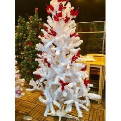 CÂY THÔNG - Cây thông noel 1M5 màu trắng - CÓ TRÁI ĐỎ