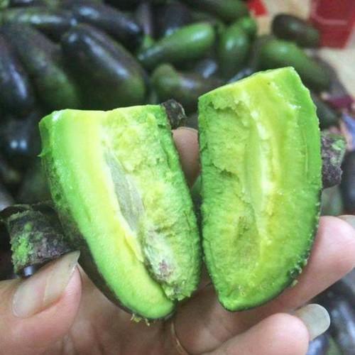 Cây giống bơ trái dài - 17812642 , 22350955 , 15_22350955 , 150000 , Cay-giong-bo-trai-dai-15_22350955 , sendo.vn , Cây giống bơ trái dài