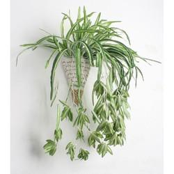 cây cỏ nhện - cây nhựa pvc