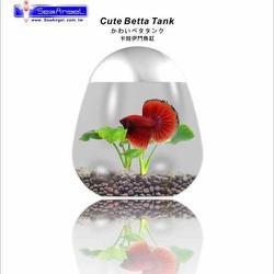 Hồ Cá Betta Mini Cute Betta Tank hình quả trứng