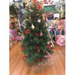 CÂY THÔNG NOEL - Cây thông 2m4 - cây cước đầu vàng gắn trái đỏ