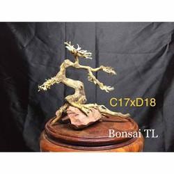 Bonsai bể cá thuỷ sinh - Bonsai mini kích thước C17xD18