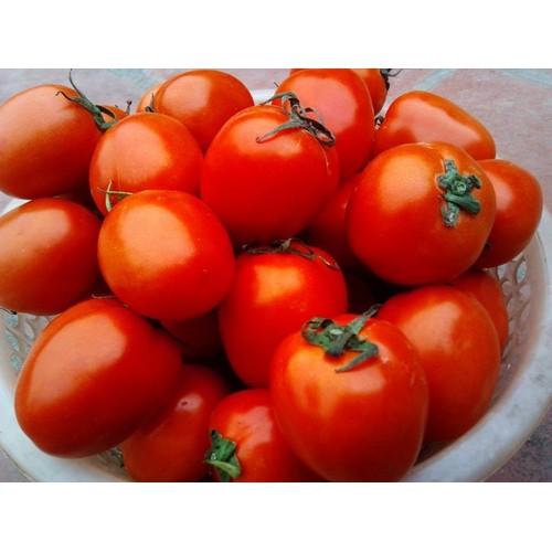 Gói 0.1g hạt giống cà chua f1 rosa - 20858758 , 23915145 , 15_23915145 , 10000 , Goi-0.1g-hat-giong-ca-chua-f1-rosa-15_23915145 , sendo.vn , Gói 0.1g hạt giống cà chua f1 rosa