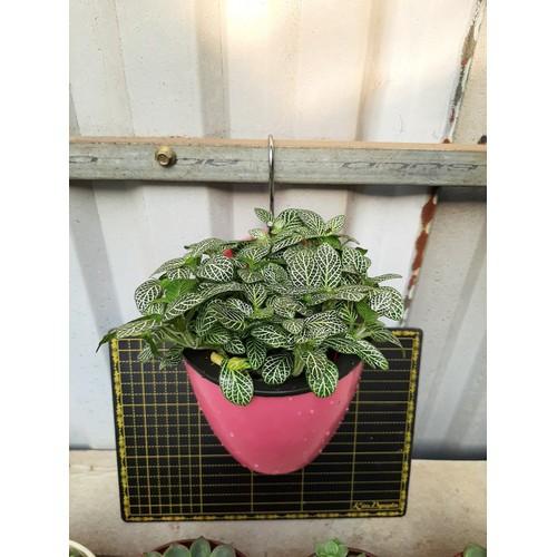 Chậu nhựa thông minh treo tường trồng cây 13 cm - màu ngẫu nhiên