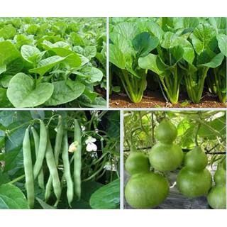 Combo hạt giống rau - Combohg 1