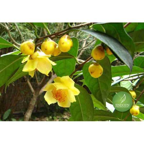 Trà hoa vàng – nữ hoàng trà giúp kéo dài tuổi thọ, ngừa bệnh cực hay jd124 - 50gram - 20953948 , 24043454 , 15_24043454 , 760000 , Tra-hoa-vang-nu-hoang-tra-giup-keo-dai-tuoi-tho-ngua-benh-cuc-hay-jd124-50gram-15_24043454 , sendo.vn , Trà hoa vàng – nữ hoàng trà giúp kéo dài tuổi thọ, ngừa bệnh cực hay jd124 - 50gram