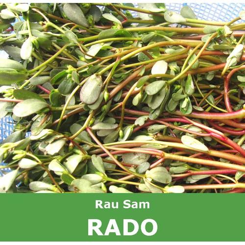 Hạt giống rau sam - 20996037 , 24102287 , 15_24102287 , 10000 , Hat-giong-rau-sam-15_24102287 , sendo.vn , Hạt giống rau sam