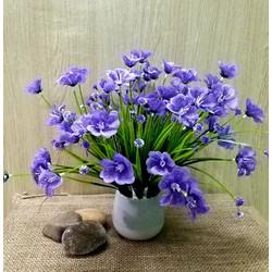 Hoa đẹp để bàn M28