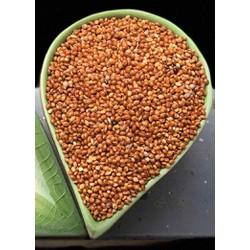 Hạt kê đỏ to-gói 1kg