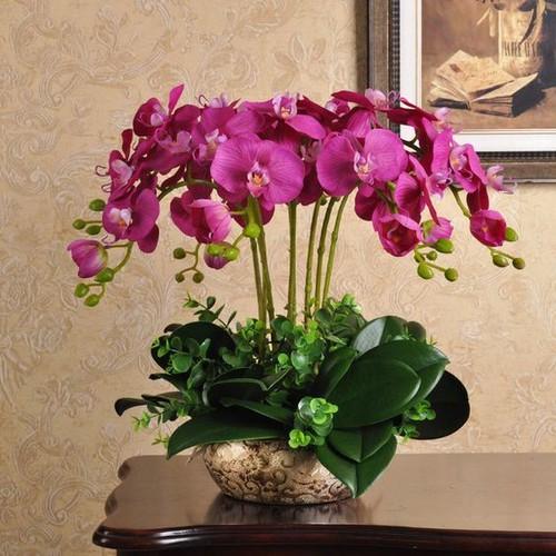 5 cây giống hoa lan hồ điệp - 21098470 , 24240187 , 15_24240187 , 220000 , 5-cay-giong-hoa-lan-ho-diep-15_24240187 , sendo.vn , 5 cây giống hoa lan hồ điệp