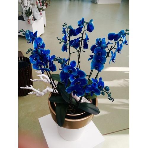 5 cây giống hoa lan hồ điệp - 21098736 , 24240494 , 15_24240494 , 220000 , 5-cay-giong-hoa-lan-ho-diep-15_24240494 , sendo.vn , 5 cây giống hoa lan hồ điệp