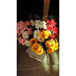 chùm hoa cúc nhật