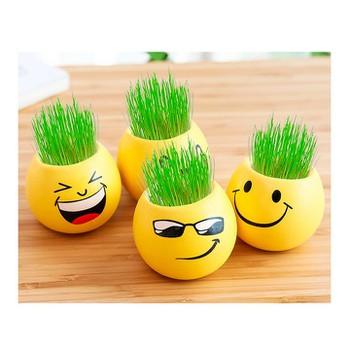 Combo 5 chậu cây mặt cười để bàn tặng kèm hạt giống ngộ nghĩnh