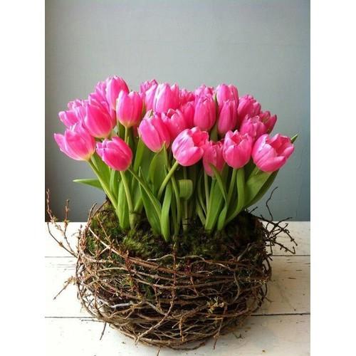 15 củ hoa tuylip đủ màu
