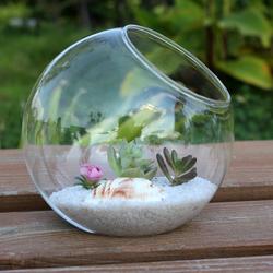 Bình thủy tinh làm Terrarium: mẫu bóng đế 12 cm