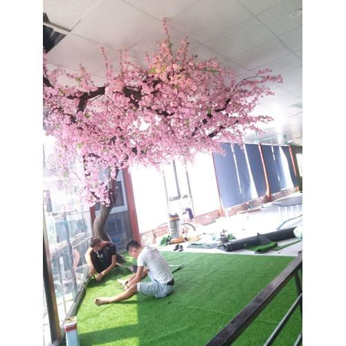 Hoa anh đào làm cây