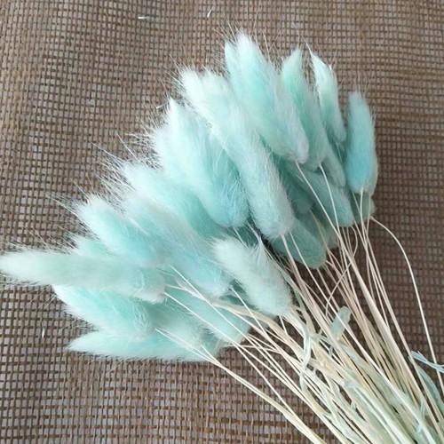 Cỏ đuôi thỏ khô phong cách vintage màu xanh tiffani
