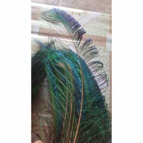 Combo 10 lông công rìa ngắn tuyệt đẹp 5 trái 5 phải tphcm