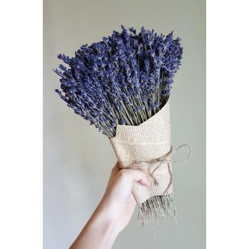 bó hoa Lavender 500 cành