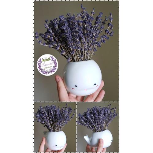 chậu hoa lavender hình cá heo ngộ nghĩnh